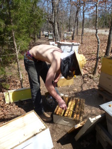 Wren working with the bees in normal studly mode. He bears a great resemblance to his Daddy.